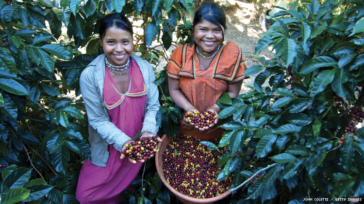 2 indigenous women with coffee beans in costa rica