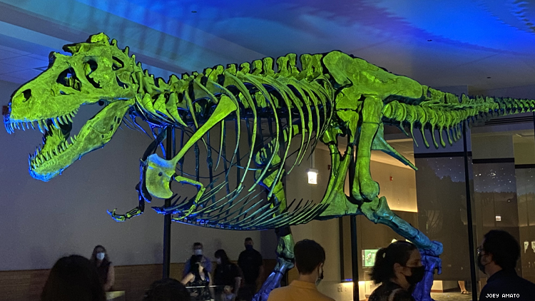 Sue T-Rex at Field Museum