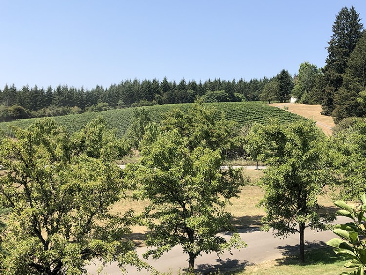 Oregon's Willamette Valley wine country is a laid-back alternative to the more established wine regions in California.