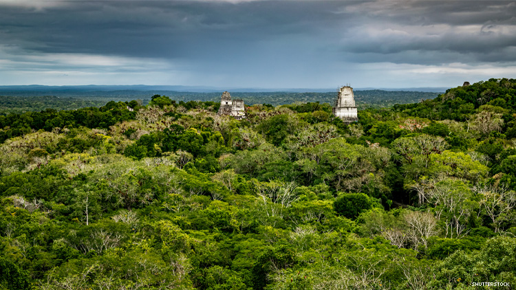 Dense jungle surrounding Tikal archeological site Guatemala