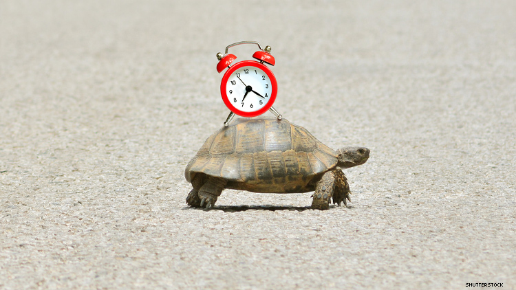 Slow travel a tortise with clock