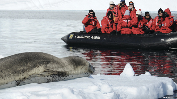 group in small boat approach a seal in antartica