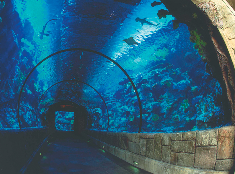Mandalay Bay Shark Reef Aquarium Tunnel Copy