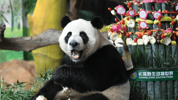 Lesbian Couples Sue Zoo In China After Denial of Couples Discount