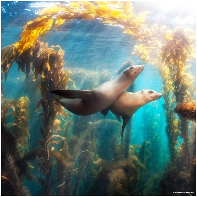 Channel Islands National Park is an underwater wonderland, with kelp forests and dancing seals.
