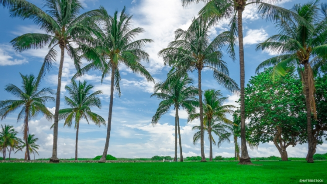 Miami Beach Lawn and Palm Trees
